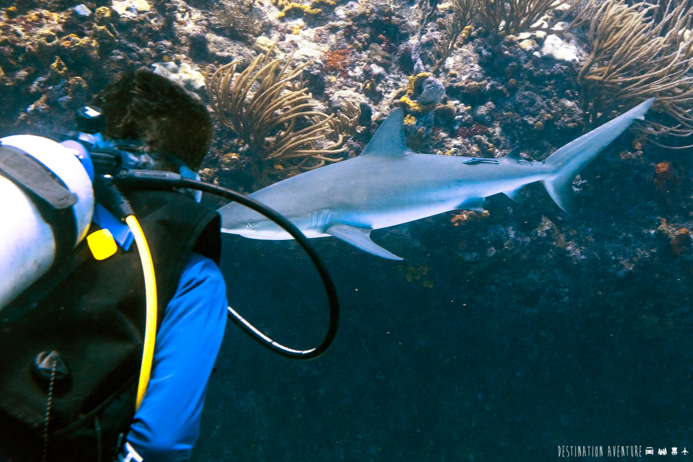 Deux jours de surprenantes plongées sous-marines à Saint-Martin dans les Caraïbes