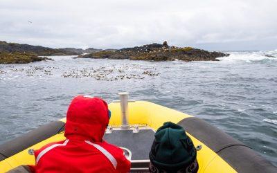 Observation de baleines en zodiac à Tofino!