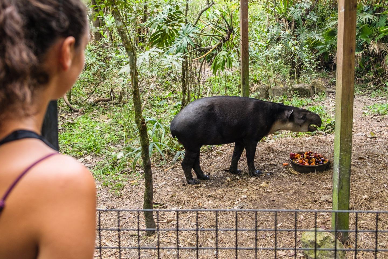 Voyage d'une semaine au Belize, notre expérience en van!