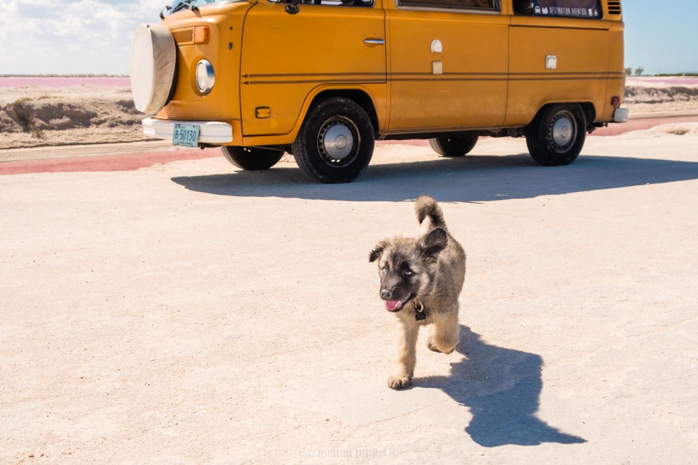L'histoire d'Osso et nos conseils pour voyager en van avec votre chien!